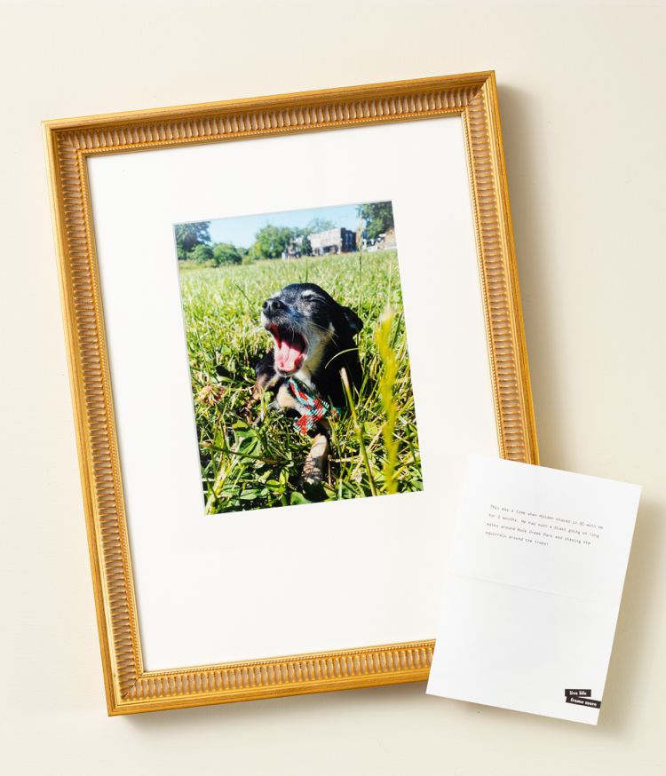Personalized gold frame, personalized pet frame, personalized dog frame